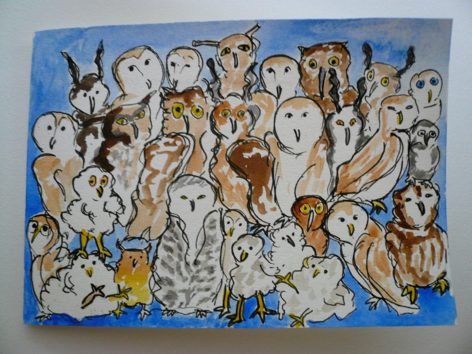 twenty-eight owls