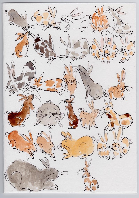 27 bunnies 1 copy